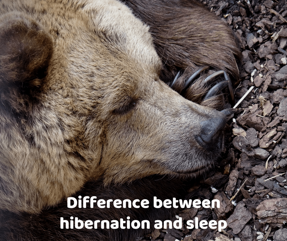Difference between hibernation and sleep